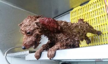 Dịch vụ tắm chó tại nhà